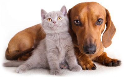 Cum sa-ti ingrijesti si sa-ti faci fericit animalul de companie